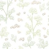 Coriander cilantro plant graphic color seamless pattern background sketch illustration vector Stock Images