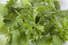 Coriander, closeup Stock Images
