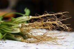 Coriander(Coriandrum sativum) roots Stock Photography