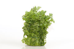 Coriander (Coriandrum sativum) Royalty Free Stock Photo