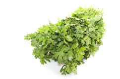 Coriander (Coriandrum sativum) Stock Photo