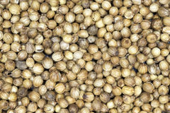 Coriander corns Royalty Free Stock Photos