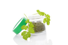 Coriander, culinary aromatic herbs. stock images