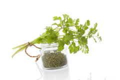 Coriander, culinary aromatic herbs. Royalty Free Stock Images