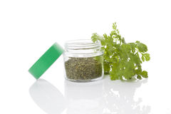 Coriander, culinary aromatic herbs. Stock Photography