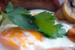 Coriander with egg Stock Photo