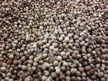 Coriander grains Royalty Free Stock Image
