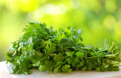 Coriander on green background. Stock Image
