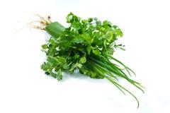 Coriander and green shallot Stock Photo
