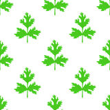 Coriander herb, chinese parsley seamless pattern. Vector illustration Stock Photos
