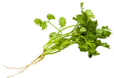 Coriander isolated Royalty Free Stock Images