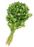 Coriander leaf Royalty Free Stock Images