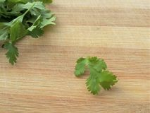 Coriander leaf Stock Photography