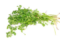 Coriander leaves Royalty Free Stock Images
