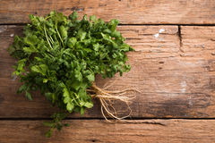 Coriander leaves, fresh green cilantro on wooden background . Stock Photo