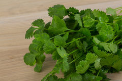 Coriander leaves Stock Images