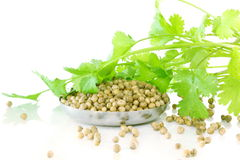 Coriander leaves with seeds in pure white background Stock Images