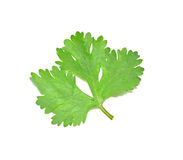 Coriander leaves with white background Stock Photo