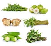 Coriander, Madan tropical, Lotus root, morning glory, Monkey app. Le on white background Stock Image