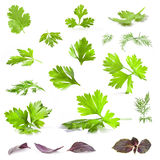 Coriander, parsley, dill and basil leaves Stock Images