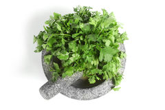Coriander in pestle and mortar Royalty Free Stock Photography