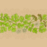 Coriander vector pattern. Coriander plant vector pattern on color background Royalty Free Stock Images