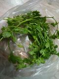 Coriander in a plastics bag. Stock Photography