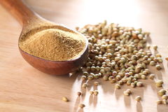 Coriander powder Royalty Free Stock Images