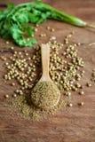 Coriander powder, Aromatic ingredients on rustic wooden table. Coriander powder, Aromatic ingredients and condiment on rustic wooden table Royalty Free Stock Photos