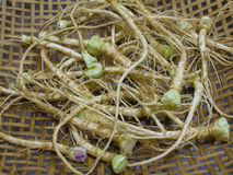 Coriander root Stock Photos