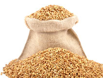 Coriander seed Royalty Free Stock Photo