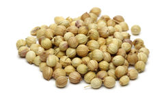 Coriander Seed Royalty Free Stock Image