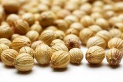 Free Coriander Seed Royalty Free Stock Photos - 75335128