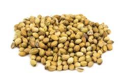 Coriander Seed Stock Photo