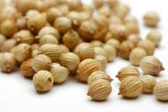Coriander seed. A collection of coriander seed Stock Images