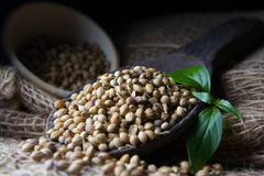 Coriander Seed Stock Image