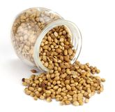 Coriander Seed in a Glass Royalty Free Stock Image