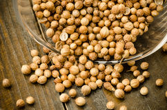 Coriander seed Stock Image