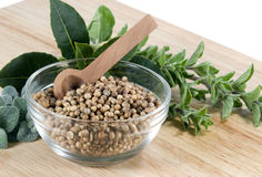 Coriander Seed - horizontal Royalty Free Stock Images