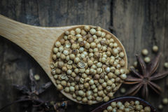 Coriander Seed. Coriander seeds, spices, food flavors Stock Photography