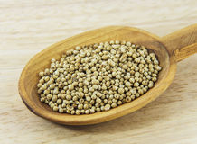 Coriander seed on spoon Stock Photography