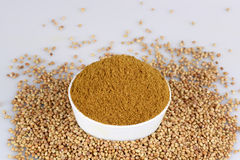 Coriander seed Royalty Free Stock Images
