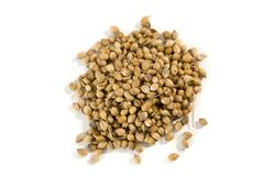 Coriander seeds Royalty Free Stock Photos