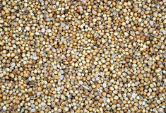 Coriander seeds. Cool texture of coriander seeds Royalty Free Stock Photography