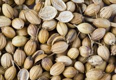 Free Coriander Seeds Royalty Free Stock Images - 12896359