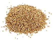 Coriander seeds Stock Image