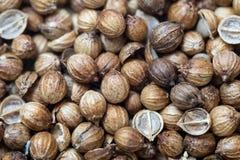 Coriander seeds. From above. Macro 1:1 closeup Royalty Free Stock Photos