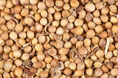 Coriander seeds background. Coriander seeds as a background Stock Photography