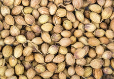 Coriander seeds Royalty Free Stock Image
