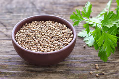 Coriander. Seeds in a bowl Royalty Free Stock Photography